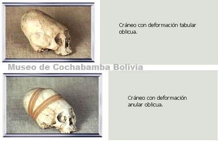 Cráneos del Museo de Cochabamba