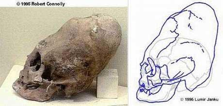 Cráneo gigante